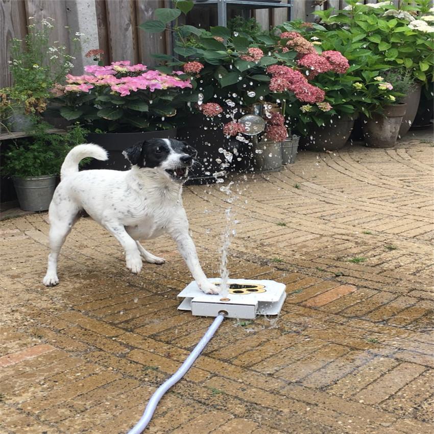 Fontaine portable pour chien