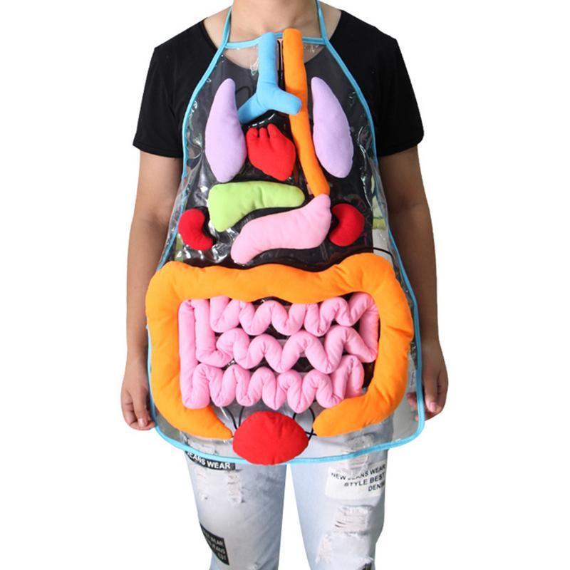 Tablier pédagogique d'organes